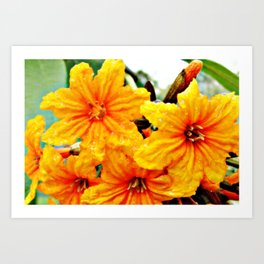 Notably fresh orange flowers Art Print
