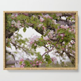 Apple Orchard Blooms by Reay of Light Serving Tray