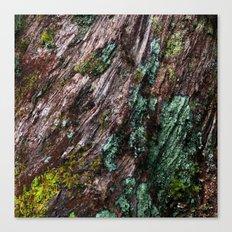 Nature's Patina Canvas Print