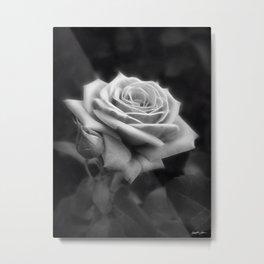 Pink Roses in Anzures 3 B&W Metal Print
