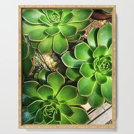 3 Succulents Serving Tray