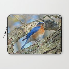 Bluebird in Tree Laptop Sleeve