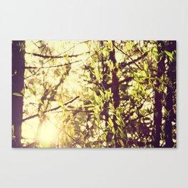 Dapple Canvas Print