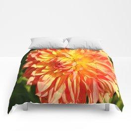 Radiant Beauty Comforters