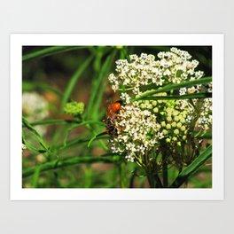 Wasp 1795 Art Print