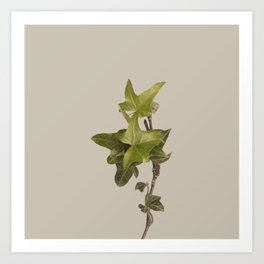 Plant Variations 4 Art Print
