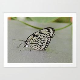 Paper Kite Butterfly Art Print