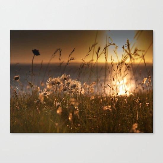 Harebells at Sunset Canvas Print