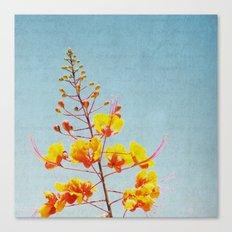 Radiant Canvas Print