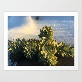 Mountain side succulents #2 Art Print