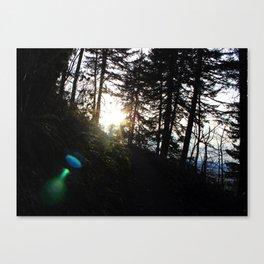 Lens flare through the trees Canvas Print