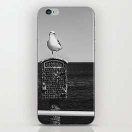 Seagull Takes A Break iPhone Skin