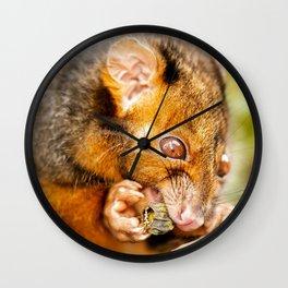 Ring-tailed Possum Wall Clock