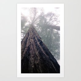 Awesome Redwood Art Print