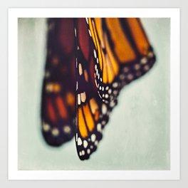 Monarch Study #5 Art Print