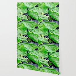 Peek  A Boo frog Wallpaper