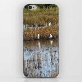 White Egrets Resting and Grooming iPhone Skin