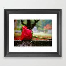 Cemetery rose Framed Art Print