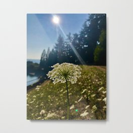 Flower Reaching for the Sun Metal Print