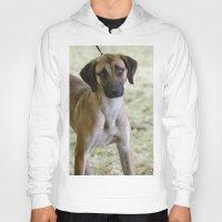the hound Hoodies featuring Hound Pup by IowaShots