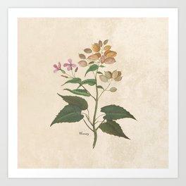 Honesty - botanical Art Print