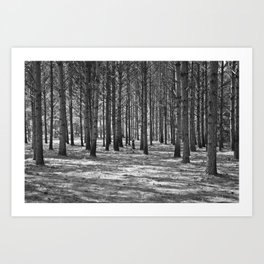 Lost in the Woods Black & White Art Print