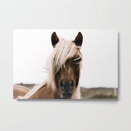 Wild Horse IV / Iceland Metal Print