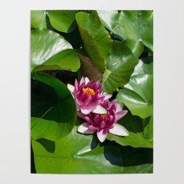 Lotus garden nature photo Poster