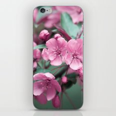 Pink Cherry Blossoms iPhone & iPod Skin