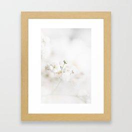 Gypsophila Framed Art Print