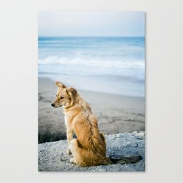 Beach Dog Canvas Print