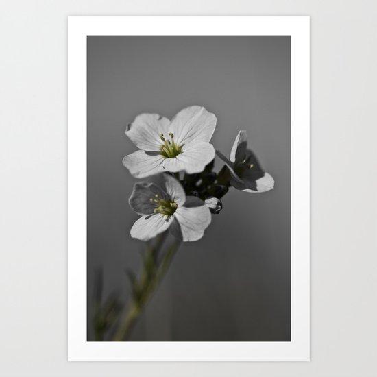 Cuckoo Flower Art Print