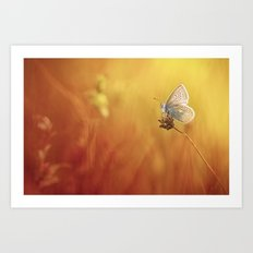 Catching a little sunshine... Art Print