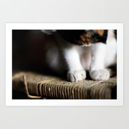 cat paws Art Print