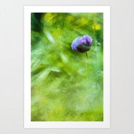 Purple poppy - photo painting Art Print