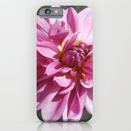 Pink Dahlia | Flowers | Floral | Botanical | Photography iPhone Case