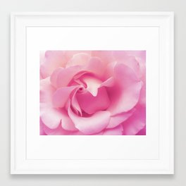 Soft pink rose Framed Art Print