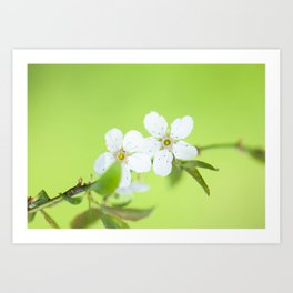 Cherry blossom tree in the green Art Print