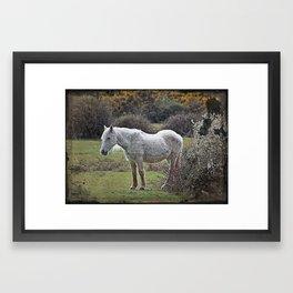 New Forest Pony Framed Art Print