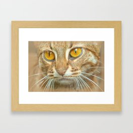 AMBER-EYED BEAUTY Framed Art Print