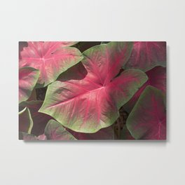 Pink Veins Metal Print