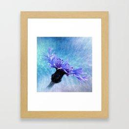 centaurea Framed Art Print