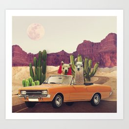 Llamas on the road 2 Art Print
