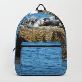 Herd of Seals on a Huge Boulder Backpack