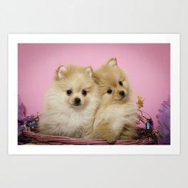 Pink Pomeranian Brothers Art Print