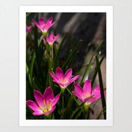Rain Lily Art Print