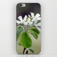 Malus flowers - spring 30 iPhone & iPod Skin
