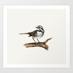 Little sparrow Art Print
