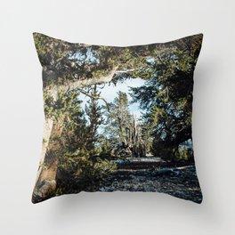 Hall of Bristlecone Pine Throw Pillow