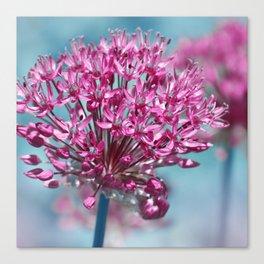 Allium pink Canvas Print